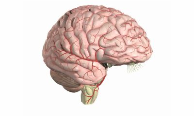 260190950-infundibilum-puente-infundibulo-corteza-cerebral