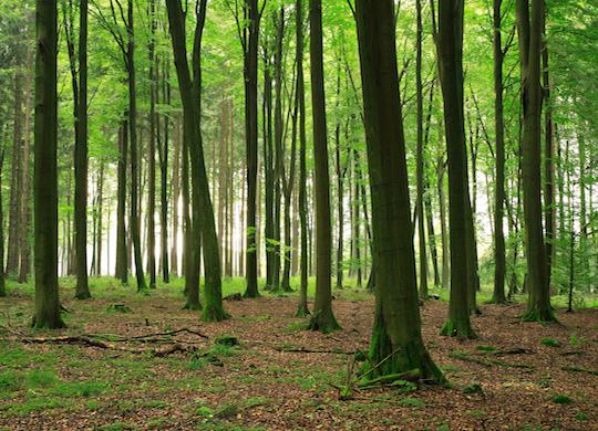¿Sabías que los árboles intentan jamás tocarse?