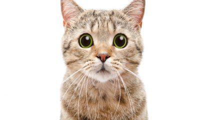 ¿Sabías que los bigotes de los gatos son un radar?
