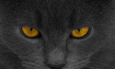 ¿Sabías que los egipcios tenían una extraña creencia con respecto a los gatos?