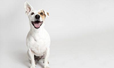 ¿Sabías que los perros recuerdan nuestras acciones?