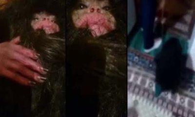 Misteriosa criatura fue capturada en Azerbaiyán