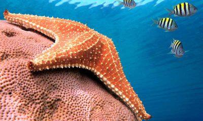 estrella de mar- modofun.com- sabías que