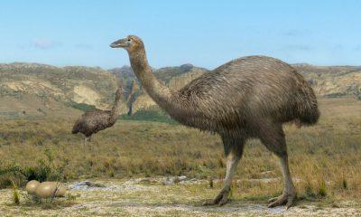 ave más grande del mundo-min