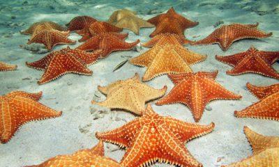 sabias que las estrellas de mar tienen pies