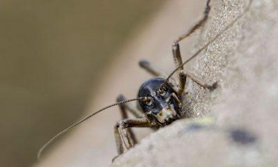 ¿Sabías que existe un insecto que se congela en invierno