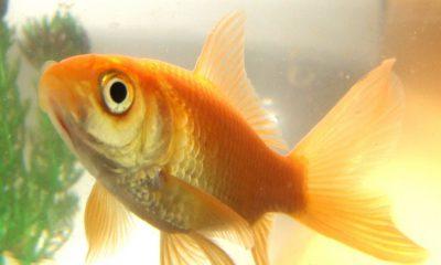 ¿Sabías que los peces conversan