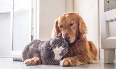 ¿Sabías que las mascotas pueden detectar enfermedades