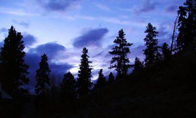 ¿Sabías que hay árboles que sufren por no dormir?
