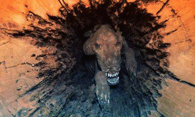 ¿Sabías que hay un perro momificado en un árbol?
