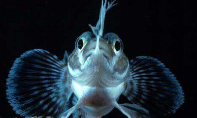 ¿Sabías que hay peces con proteínas anticongelantes?