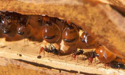¿Sabías que no solo las abejas trabajan con miel?