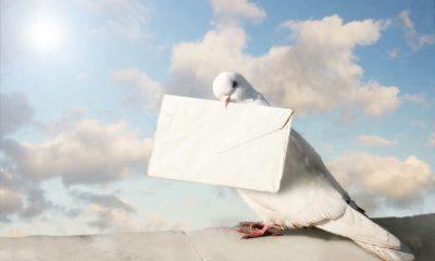 ¿Sabías que las palomas mensajeras tienen una gran historia?