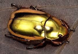 ¿Sabías que el escarabajo joya detecta incendios?