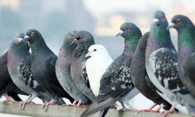 ¿Sabías que las aves transmiten más de 40 enfermedades