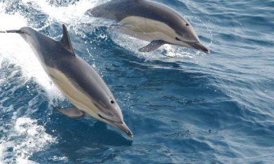 ¿Sabías que los delfines duermen de diferentes formas?