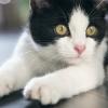 ¿Sabías que los gatos no se sienten atraídos lo dulce?