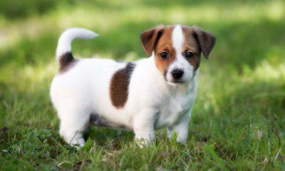 ¿Sabías que un perro sordo aprendió lenguaje de señas?