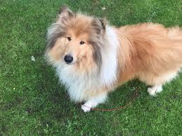 ¿Sabías que un perro sordo aprende lenguaje de signos?