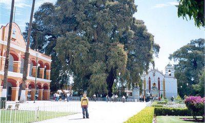 ¿Sabías que el árbol más grande tiene un diámetro de 36,2 metros?