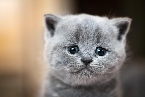 ¿Sabías que las emociones de los gatos no son tan difíciles de interpretar?